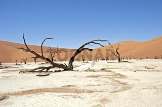 Vertrocknete Baeume im Deadvlei Namibia, Afrika