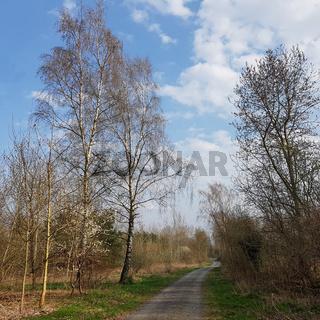 Birkenweg im Norden von Berlin im Vorfrühling