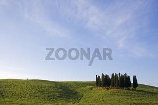 Zypressen in einem Kartoffelfeld, Toskana, Italien, Cypress in potato field, Tuscany, Italy