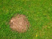 Heap the soil among green grass