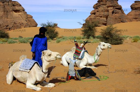 Tuareg Nomade mit Mehari Dromedar