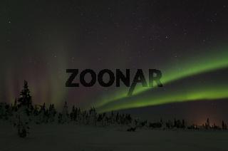Nordlicht (Aurora borealis), Gaellivare, Norrbotten, Lappland, Schweden