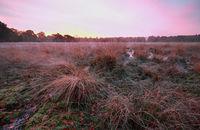 purple frosty sunrise over marsh