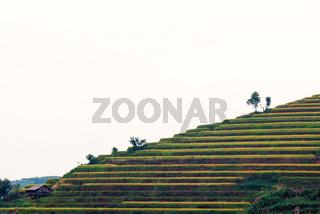 Beautiful ladder of rice terrace
