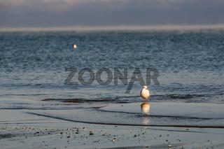 eine Möwe am Strand in der Abendsonne