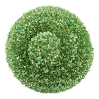 top view of boxwood plant isolated on white background