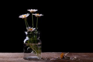 Gänseblümchen im Glas