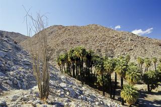 Anza Borrego Wüste