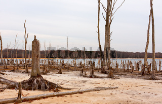 Dead Trees Around a Lake