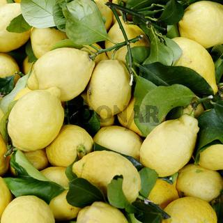 Gelbe Zitronen