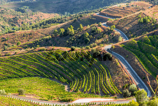 Vineyards and vine n the hills of the Montsant county, Spain