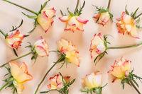 Twelve roses on paper