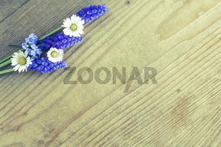 Gänseblümchen und Traubenhyazinthe - Frühlingsblumen auf Holz.
