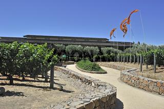 Blick auf die Weinreben  der Robert Mondavi Winery, Napa Valley,