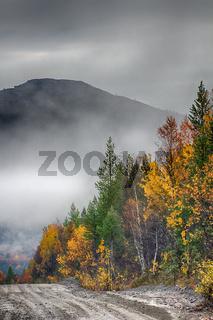 Dirt road through autumn woods, fog