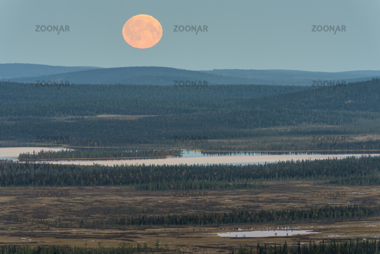 Moonrise, Muddus National park, Lapland, Sweden.