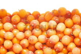 Background from frozen sea-buckthorn berries.