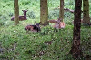 Herbst im Nationalpark Harz