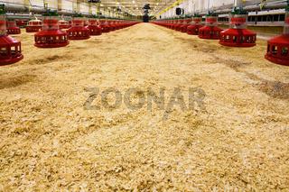new poultry farm