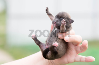 Very cute black puppies.