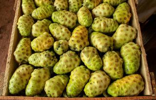 Früchte für dem Markt