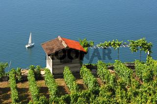Winzerhütte am Genfersee
