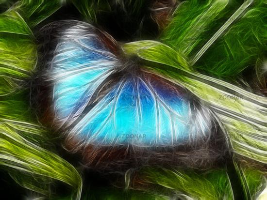 Blue Morpho moth Butterfly