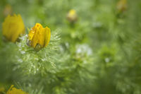 Beautiful springtime background with shallow depth of field