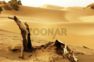 Landscape of dead trees and sandhills of deserts