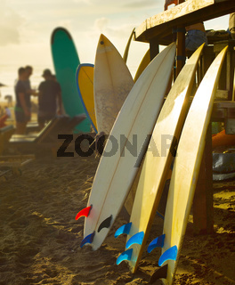 Beach surfers rental surfboards sunset