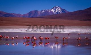 Laguna Kara lagoon with flamingos and mountain