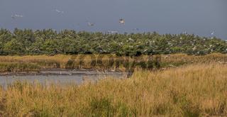 Wasser- und Wattvögel im Schutzgebiet Darsser Ort