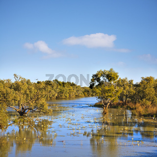 Outback Australia Northern Territory James River Trees in Water