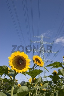 Strommast mit Sonnenblumen