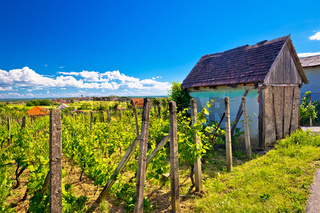 Traditional vineyard and cottage in Vrbovec