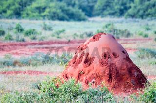 Red Termite Mound