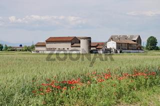 Growing wheat in a barn