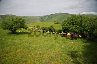 Landscape with sheeps