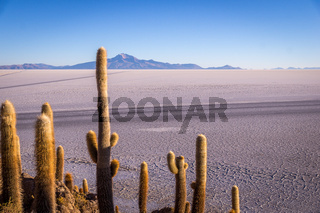 View from Isla Incahuasi, Uyuni, Bolivia