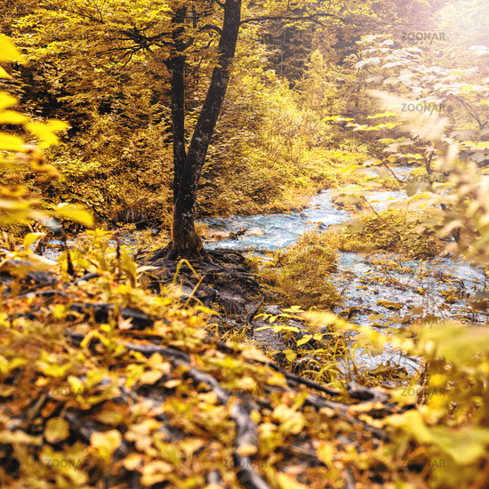 Autumn forest with tree at a water spring