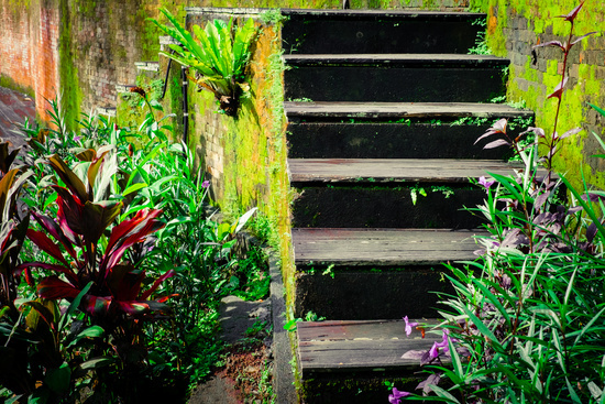 Weathered wooden stairs of abandoned tropical house