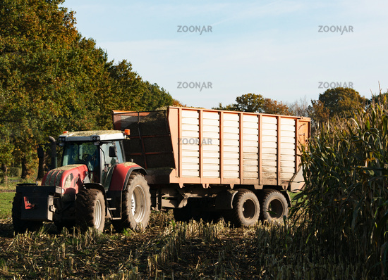 Forage at harvest of corn