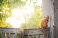 Orange kitten on a rustic fence