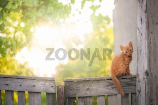 Orange kitten on a rustic fence