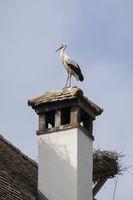 White stork on a chimney