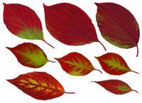 Fall_leaves01