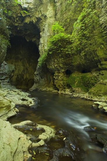 Tunnel im Kalkgestein, ein schmaler Pfad fuehrt durch einen hoehlenaehnlichen Tunnel im Kalkgestein. Die Waitomo-Region ist beruehmt fuer ihr grossen, unterirdischen Hoehlensysteme, Ruakuri Bush and Scenic Reserve, Waitomo, King Country, Nordinsel, Neusee