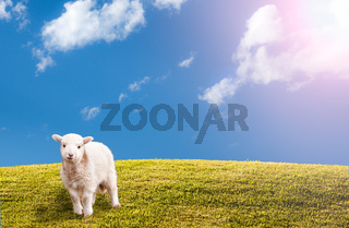 Green grassy meadow with blue sky and easter lamb