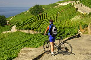 Radfahrer in den Weinbergterrassen des Lavaux