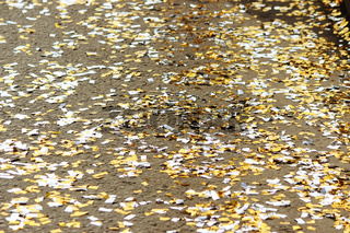 festival background with gold and silver sequins that lie on the pavement the road bokeh.